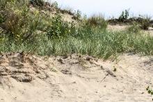 Chesterton, Indiana dunes 2